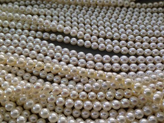 美しい美麗真珠